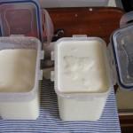 Wenn die Joghurtkultur gut verteilt ist, die Becher ganz füllen und schließen