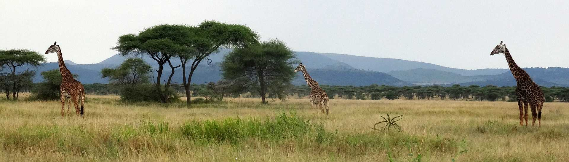 """Einfach """"Serengeti"""""""