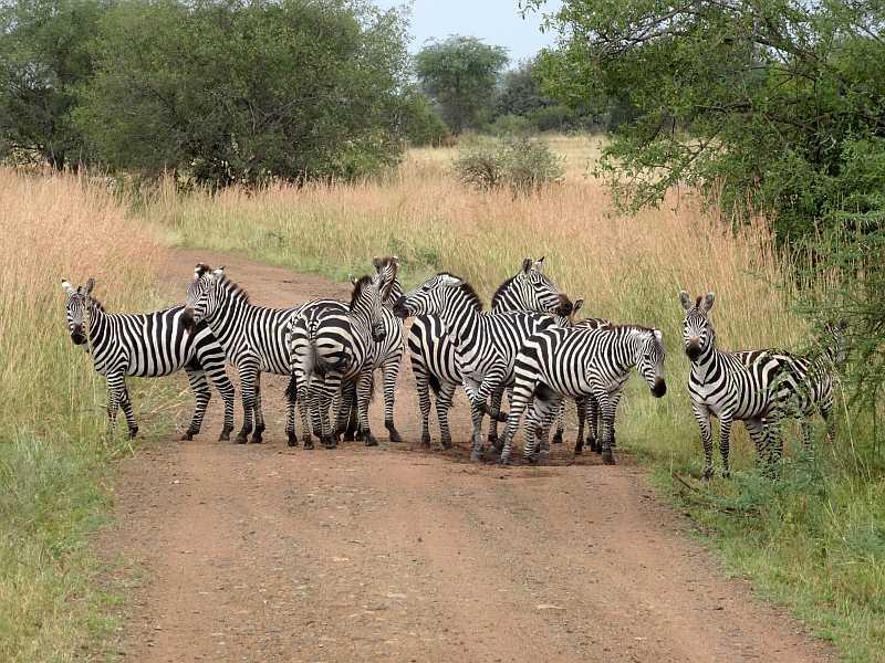 Ein Zebra-Streifen!