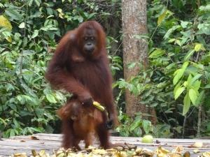 Frau Orang und das Kleinchen